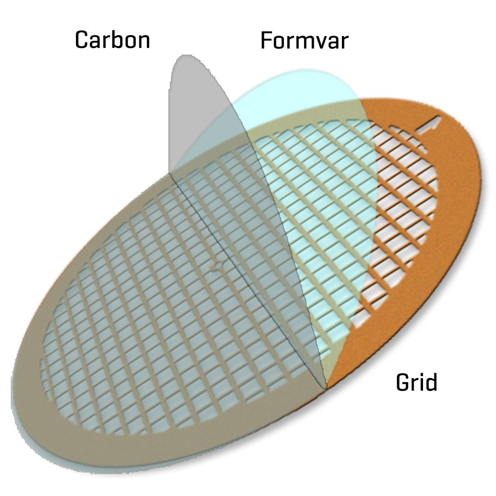 Formvar/Carbon film on Gold 300 mesh (25)