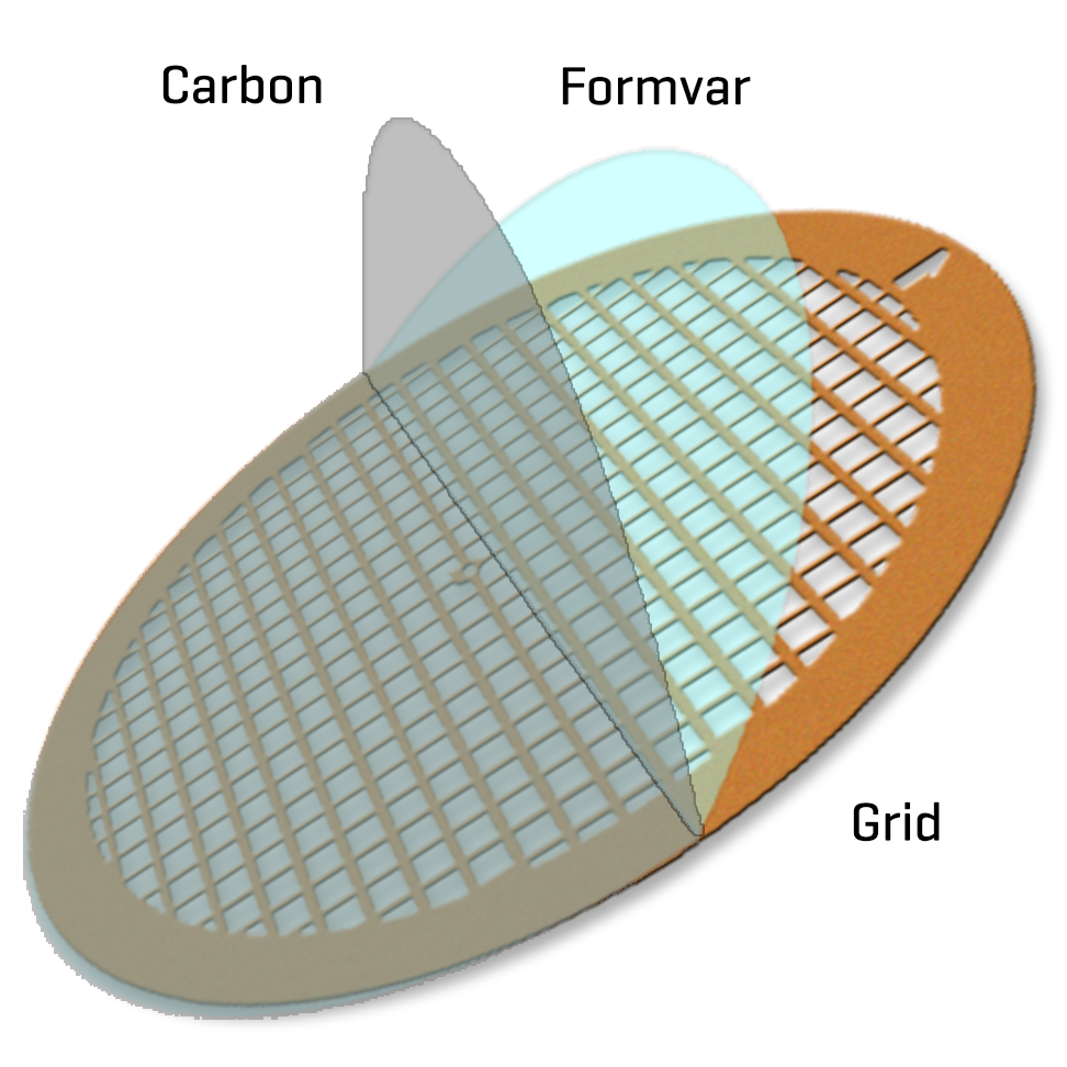 Formvar/Carbon film on Gold 400 mesh (50)