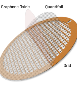 GO on Quantifoils R1.2/1.3 400 mesh copper grids (10)