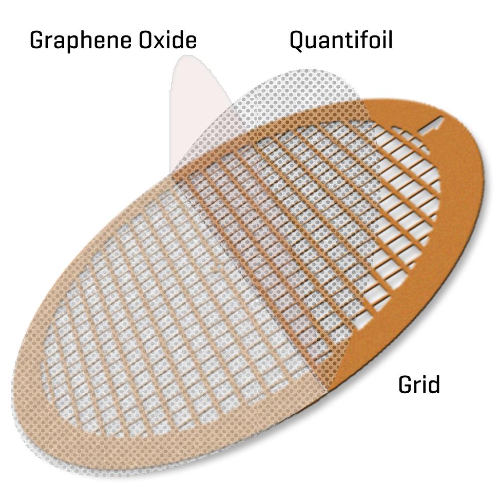 GO on Quantifoils R1.2/1.3 400 mesh copper grids (10)